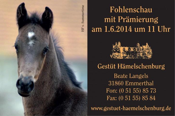 Fohlenschau Hämelschenburg 2014 - Einzel-Video